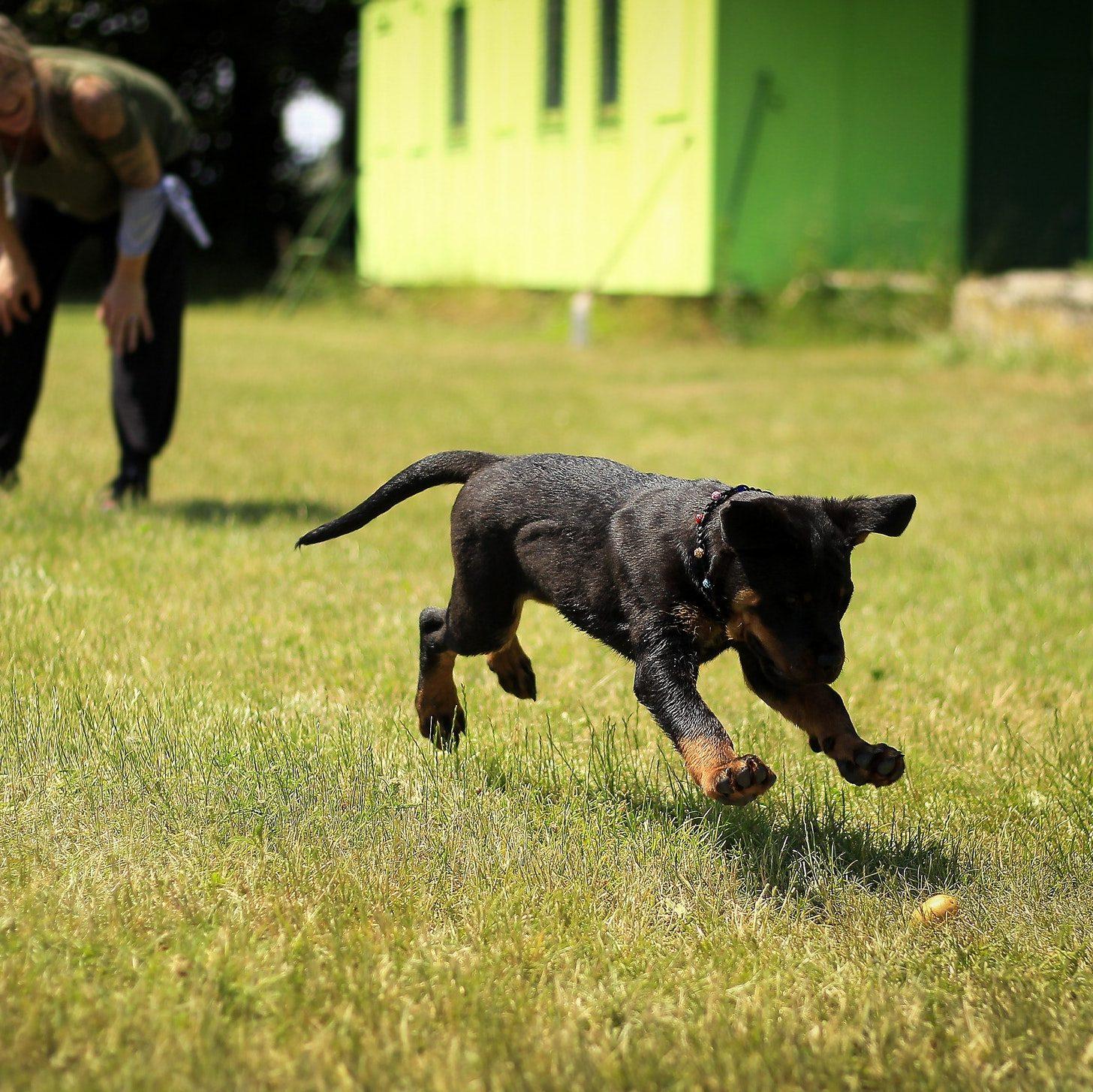 Hundeskov - livsstilen
